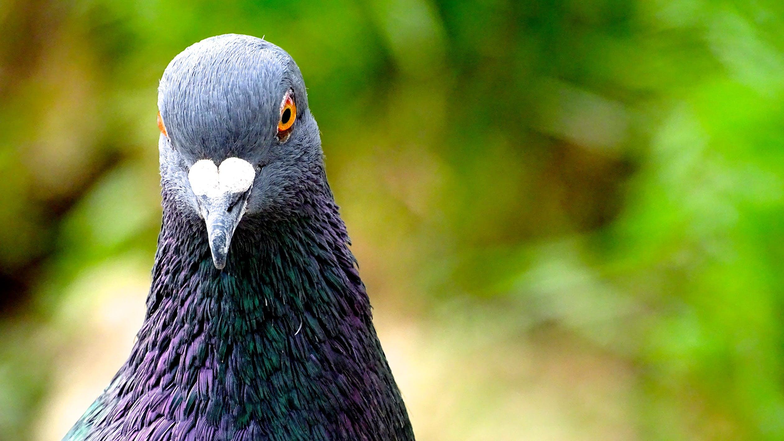 Comment les oiseaux entendent-ils ?