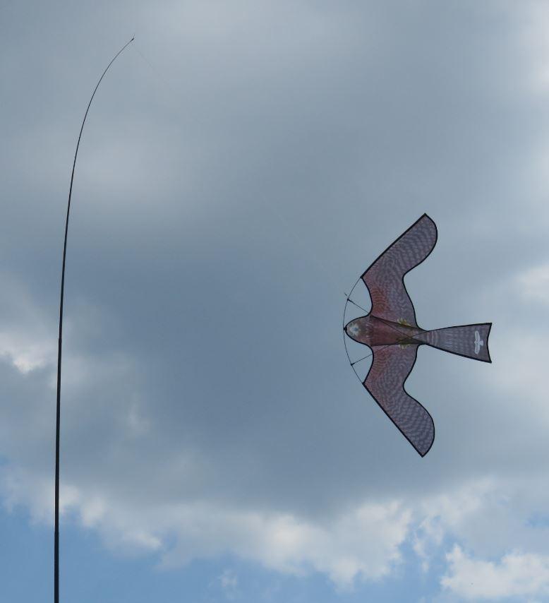 Cerf-volant effaroucheur en forme de rapace