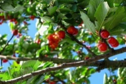 6 ways to efficiently protect fruit trees from bird damage!